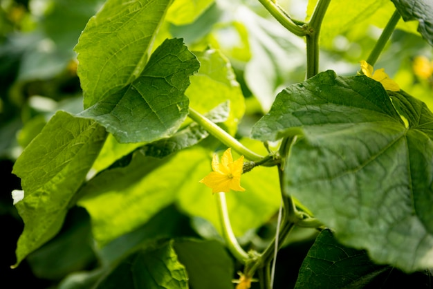 Liście i kwiaty warzyw w szklarni