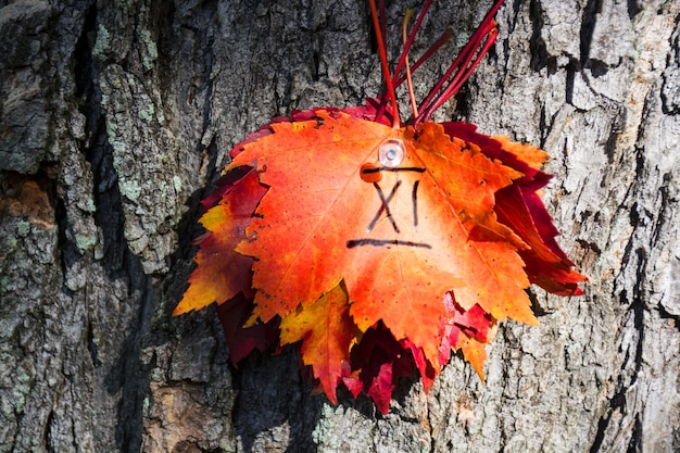 Liście klonu czerwonego przypięte na drzewie z numerem 11