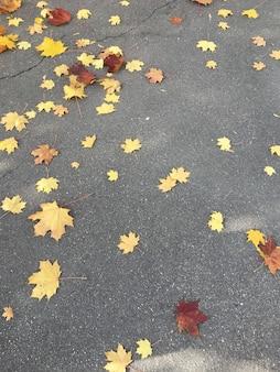 Liście klonu na drodze asfaltowej