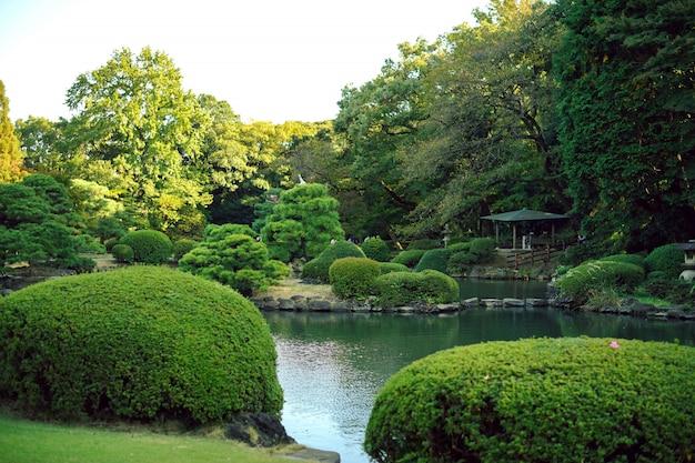 Liście klonu zmieniają kolor, jesień w tokio w japonii