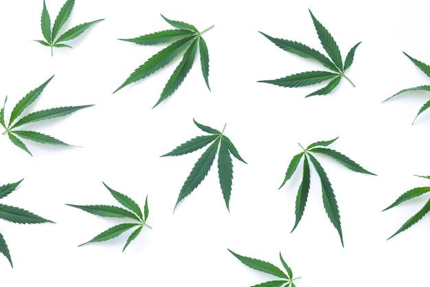 Liście konopi, konopi lub marihuany na białym tle na białym tle widok z góry
