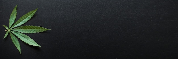 Liście konopi medycznych i koncepcja oleju cbd, widok z góry liści konopi na czarnym tle