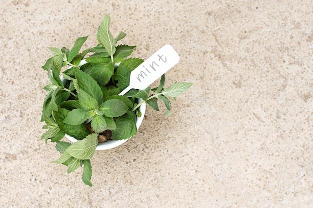 Liście mięty na betonowym tle. świeże zioła aromatyczne. tabliczka z napisem. skopiuj miejsce