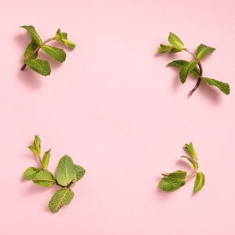 Liście mięty zielonej na różowym tle