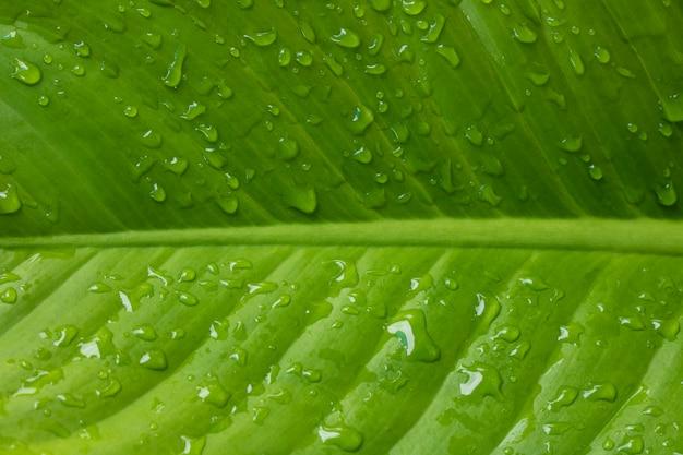 Liście mokre spadają po sezonach deszczowych