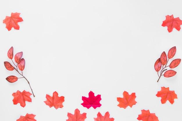 Liście na białej tablicy
