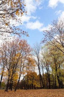 Liście na drzewach, jesień - fotografowane z bliska liście żółtego koloru na drzewach, sezon jesienny, mała głębia ostrości