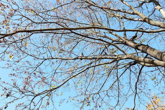 Liście na drzewach parkowych zmieniły kolor na żółty. w sezonie jesiennym.