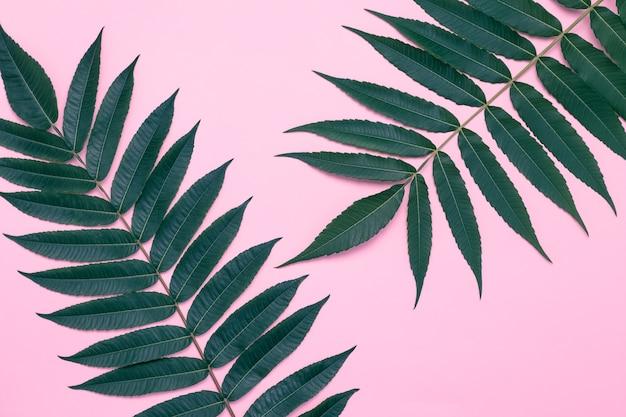 Liście na różowo