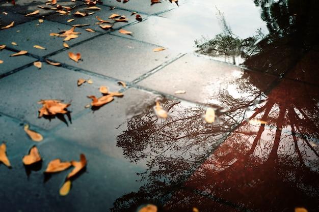 Liście na ziemi i odbicie wody po ulewnym deszczu.