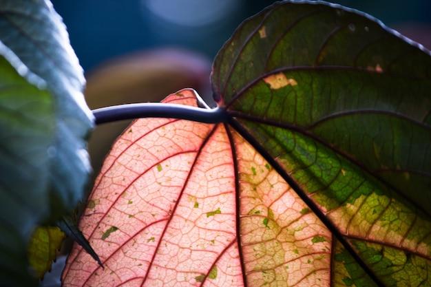 Liście odbijające naturalne światło słoneczne w ciągu dnia na ciemnym tle