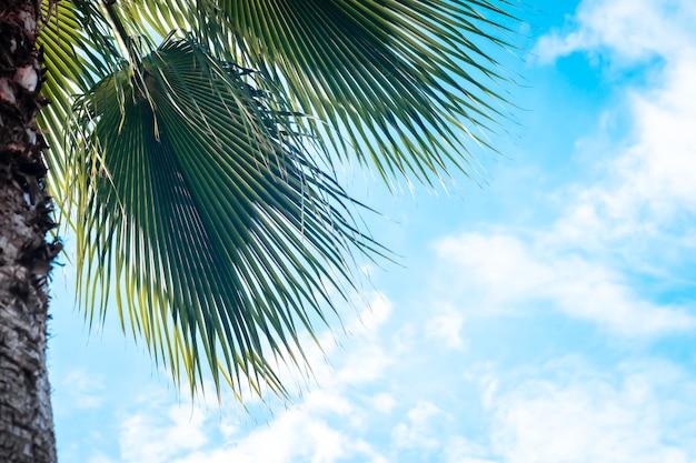 Liście palmowe błękitne niebo. pomysł na relaks i wakacje nad morzem