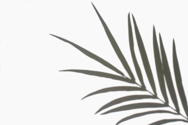 Liście palmowe i ich cień na białym tle