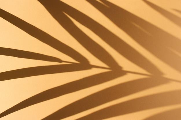 Liście palmowe i ich cień na pomarańczowo
