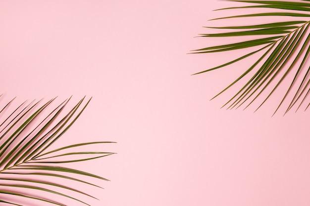 Liście palmowe na białym tle na różowej powierzchni z miejsca na kopię.