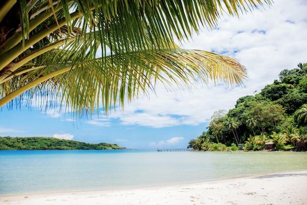 Liście palmowe na morzu w lecie.