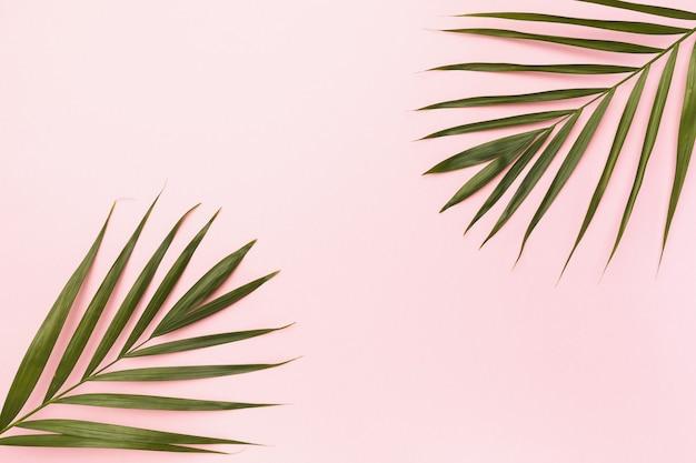 Liście palmowe na różowym tle z miejscem na kopię pośrodku, widok z góry