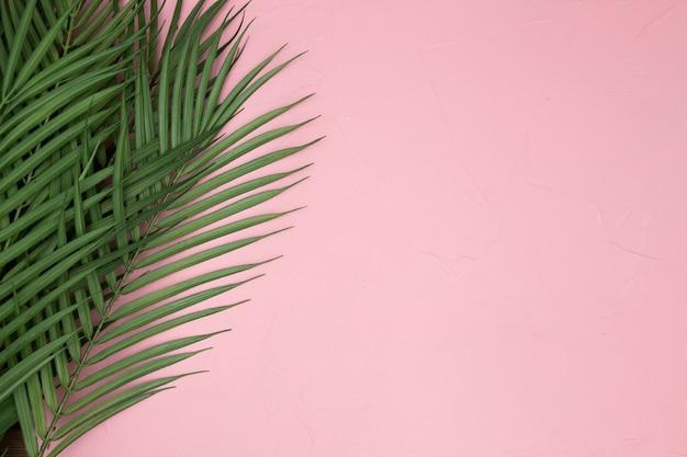 Liście palmowe na różowym tle