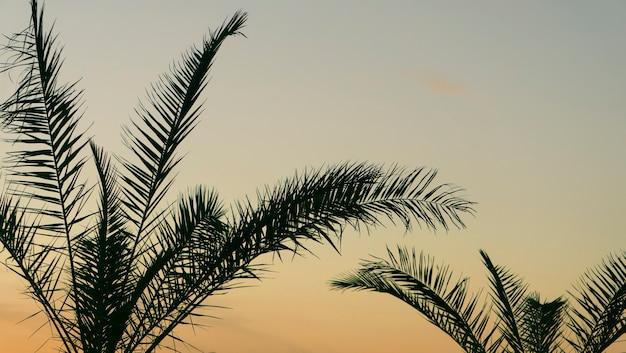 Liście palmowe tło