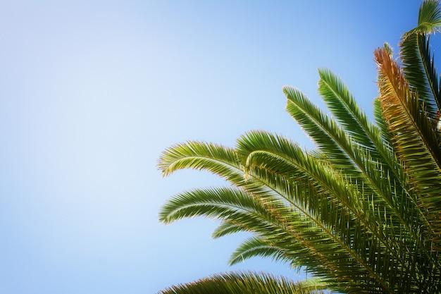 Liście palmowe w błękitne niebo, stonowane retro na instagramie