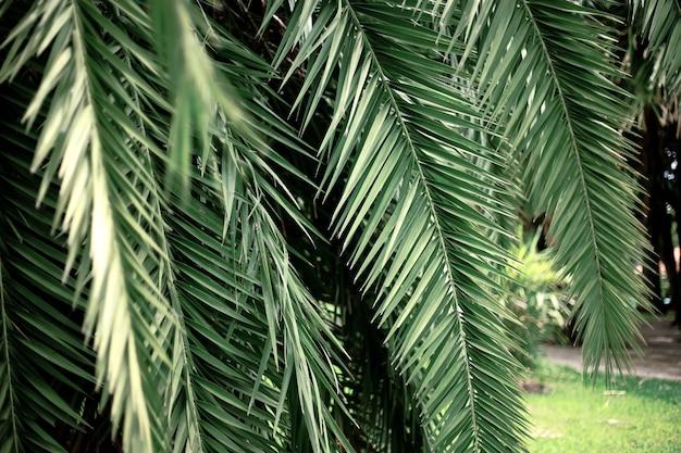 Liście palmowe w parku z zielonym tłem.