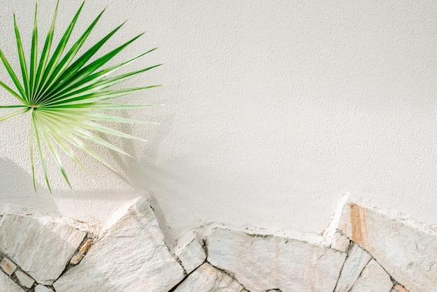 Liście palmy podróżnika rzucają cień na pomarańczowy betonowy mur.