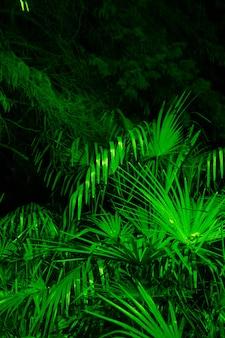 Liście palmy sabałowej z bliska w zielonym świetle, nocny las