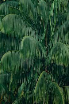 Liście palmy tło