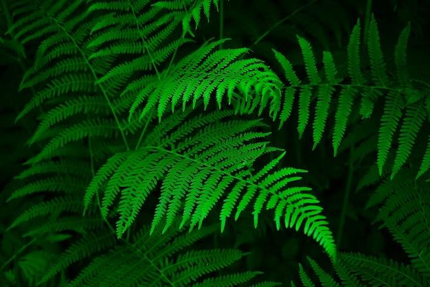 Liście paproci i ciemny leśny strumień