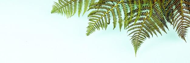 Liście paproci na niebieski, leżał płasko, widok z góry