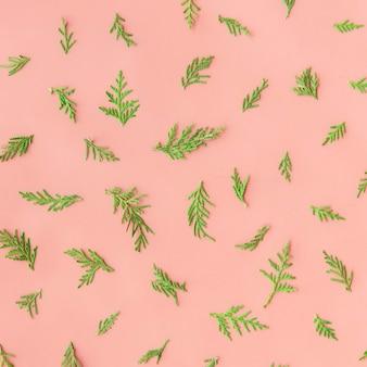 Liście paproci na różowym tle