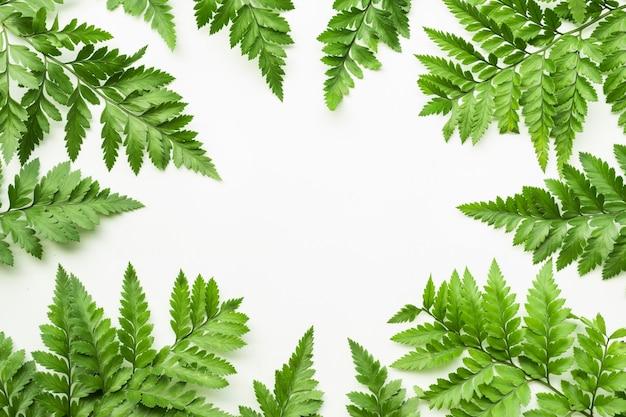 Liście paproci wzór na tle białej kopii przestrzeni. projekt koncepcje tropikalnej przyrody botanicznej.