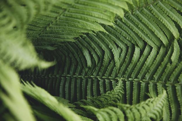 Liście paproci z bliska. tekstura natury.