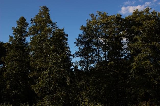 Liście światło słoneczne kora drzewa tekstura natura las las tło drzewa liściaste iglaste