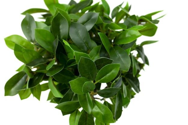 Liście sztucznego lauru rośliny doniczkowej. tworzywa sztuczne do projektowania biurowego