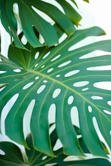 Liście tło zielone rośliny