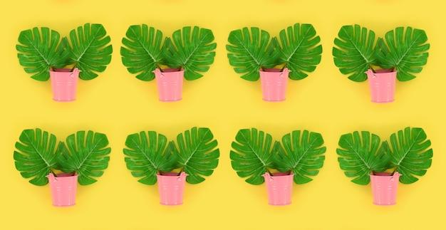 Liście tropikalne monstera palm leży w pastelowe wiadra na kolorowym tle