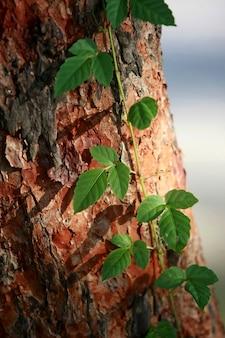 Liście tropikalnych drzew leśnych tekstura tło tapeta
