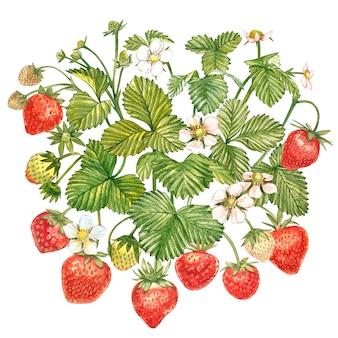Liście truskawki z kwiatami i dojrzałymi jagodami. ręcznie rysowane akwarela malarstwo ilustracja.
