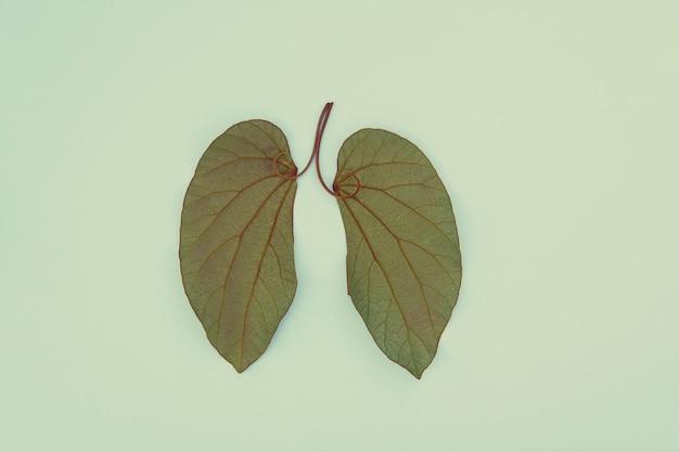 Liście w kształcie płuc