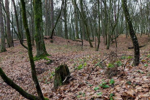 Liście w lesie klonowym
