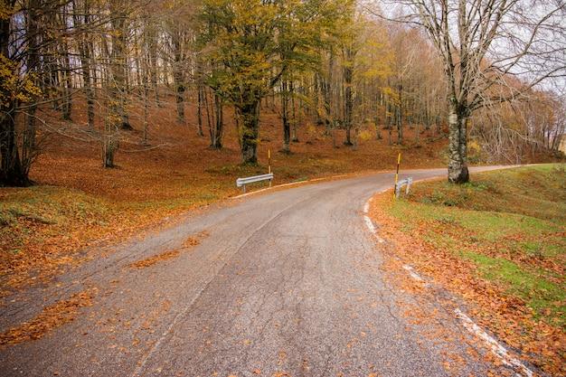 Liście w parku narodowym monti simbruini, lazio, włochy