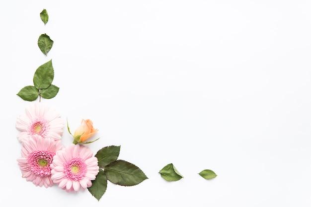 Liście w pobliżu stokrotki i pąk róży