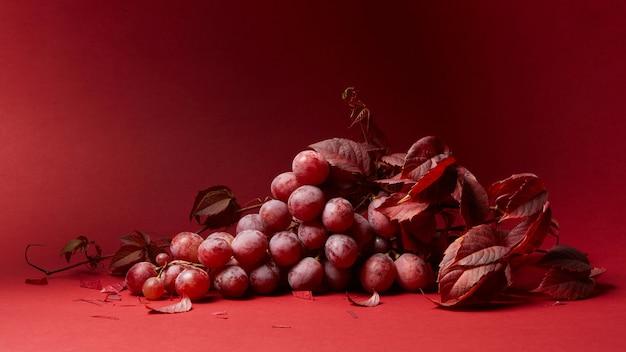 Liście winogron i kiść dojrzałych czerwonych winogron na czerwonym tle