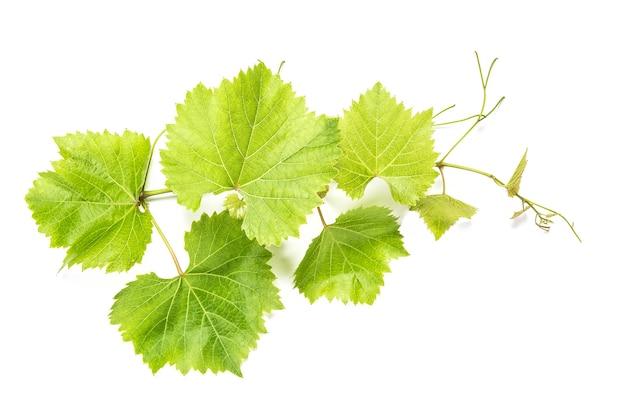 Liście winogron na białym tle. zielony liść winorośli