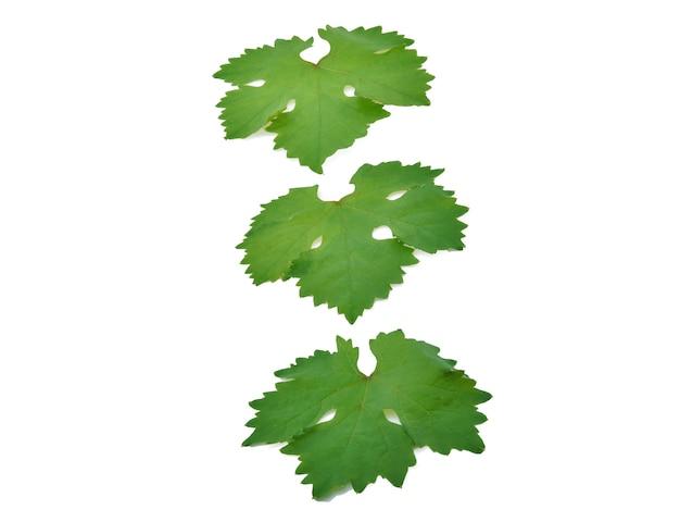 Liście winorośli na białym tle na tle