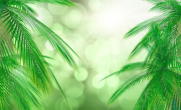 Liście z drzewa palmowego