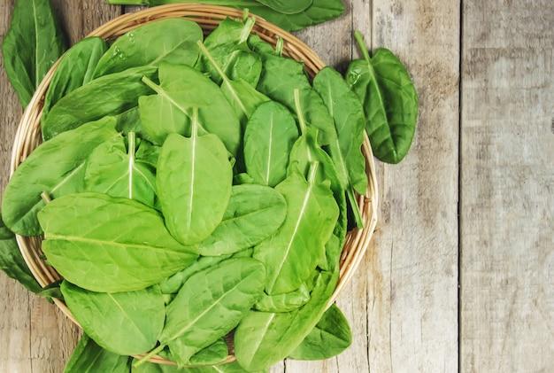 Liście zieleni, szczawiu i szpinaku. selektywna ostrość.