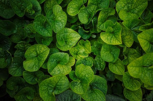 Liście zielone tło. sadzi jedno tonowe zdjęcie. koncepcja wzór natury. copyspace, miejsce na twój tekst.