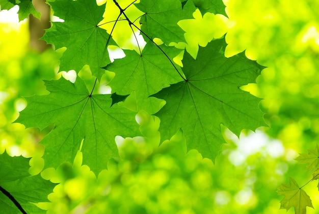 Liście zielone tło w słoneczny dzień
